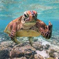Bức ảnh chú rùa