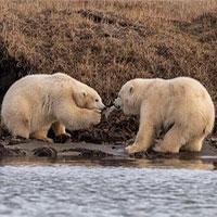 Bức ảnh gây chấn động ở Alaska
