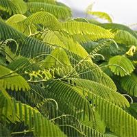 Bước đột phá về tăng hiệu quả quang hợp của cây trồng