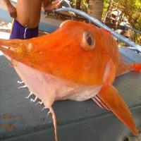 Cá biển