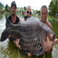 Cá chép lớn nhất thế giới nặng hơn 1 tạ ở Thái Lan