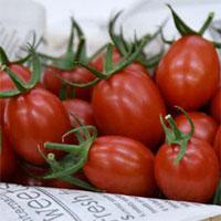 Cà chua chỉnh sửa geneCRISPR đầu tiên trên thế giới được bán
