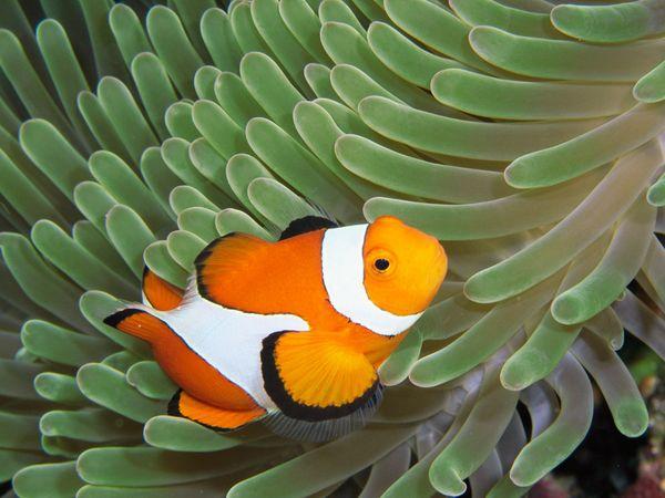 Cá điếc vì biển nhiều axit