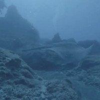 Cá đuối dài ba mét biến hình thành tảng đá dưới đáy biển