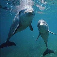 Cá heo có những đặc điểm tính cách tương tự con người