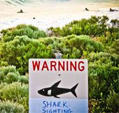 Cá mập tại Australia được gắn thẻ phát tín hiệu