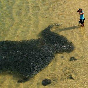 Cá nhuộm đen bờ biển Mexico