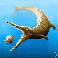 Cá sấu cổ đại từng thông minh giống cá heo?