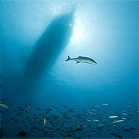 Cá tiếp xúc với tiếng ồn có nguy cơ chết sớm