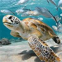 Cá và các động vật biển có thể chết đuối không?