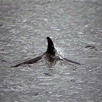 Cá voi chết hàng loạt, Anh nghi do tàu ngầm Nga