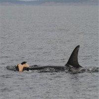 Cá voi đau xót trước cái chết của đồng loại như con người