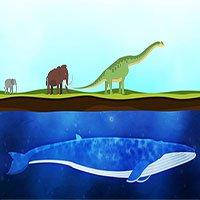 Cá voi trở thành động vật lớn nhất thế giới như thế nào?