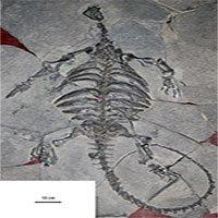 Các nhà khảo cổ phát hiện bộ xương tổ tiên của loài rùa