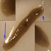 Các nhà khoa học đưa giun 2 đầu từ vũ trụ về Trái đất
