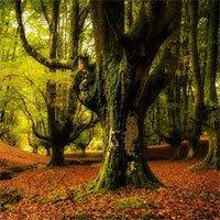 Các nhà khoa học lên kế hoạch tạo ra khu rừng