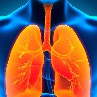 Các nhà khoa học phát triển thành công phổi
