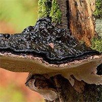 Các nhà khoa học tạo ra bước đột phá trong việc biến gỗ thành một nguồn điện sạch