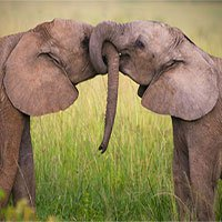 Các nhà khoa học tìm ra cách tính tuổi thọ của các loài động vật