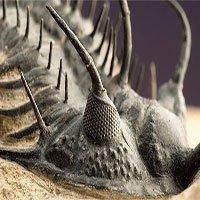 Các nhà khoa học tìm ra nguyên nhân sự kiện tuyệt chủng 252 triệu năm trước