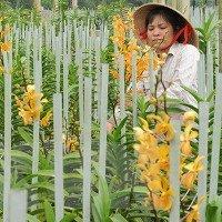 Các nhà khoa học tìm thấy 8 loài lan mới tại khu vực Tây Nguyên