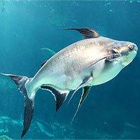 Các sông và hồ trên thế giới đã mất gần 90% các loài sinh vật cỡ lớn