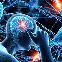 Các tế bào não phục hồi chức năng DNA của chúng như thế nào khi bị già hóa?