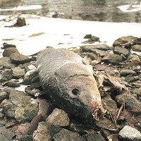 Các thảm họa xả thải gây ô nhiễm nguồn nước trên thế giới
