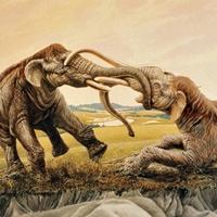 Cách đây 12.000 năm, có hai con voi ma mút giao tranh đến cuốn cả ngà vào nhau, xong chết vì đói