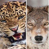 Cách sống sót khi đối mặt với các loài thú dữ
