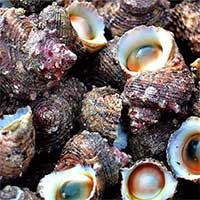 Cách xử lý khi bị ngộ độc ốc biển