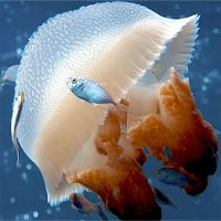 Cách xử lý khi bị sứa đốt và chuột rút khi tắm biển mùa hè