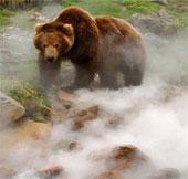 Cận cảnh gấu Nga đùa giỡn với