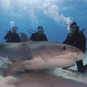 Cận cảnh những loài cá mập nguy hiểm nhất thế giới