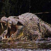 Cận cảnh quái thú Gustave tàn sát 300 người vùng sông Nile