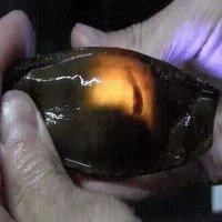 """Cận cảnh trứng cá mập: nhìn giống nòng nọc mà có """"lòng đào"""" giống trứng gà đến lạ"""