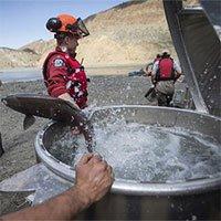 Canada dùng trực thăng giải cứu hàng triệu cá hồi mắc kẹt do lở đất
