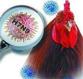 Cảnh báo cúm H7N9 có thể lây từ người sang người