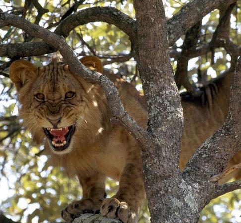 Cảnh báo nguy cơ đại tuyệt chủng các loài