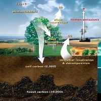 Carbon trên Trái Đất được lưu trữ ở đâu?