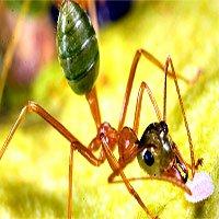Câu hỏi dễ mà khó: Bạn có biết loài kiến ăn gì không?
