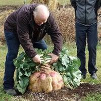 Cây củ cải 29kg giữ kỷ lục nặng nhất thế giới