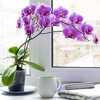 Cây trồng trong nhà hút ẩm không khí khi trời nồm