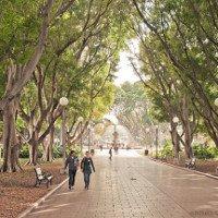 Cây xanh có thể làm mát thành phố được không và bằng cách nào?