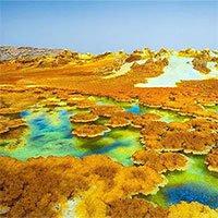 Chân dung 5 sinh vật địa cầu sống khỏe ở… hành tinh khác