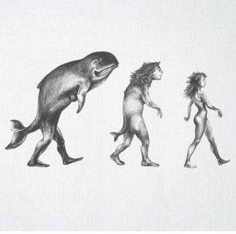 Chân, tay người được tiến hóa từ vây cá cổ đại