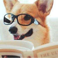 Chào năm Chó, hãy tìm hiểu những sự thật cực bất ngờ về giống loài
