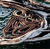 Chế tạo vật liệu mới giúp xử lý môi trường bị ô nhiễm
