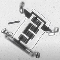 Chế thành công robot nhỏ xíu có thể chui vào cơ thể người