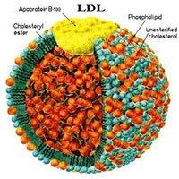 Chỉ số LDL cholesterol trong máu là gì?